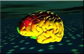Brain Bevel 1